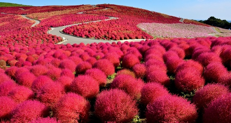 hitachi-seasidepark